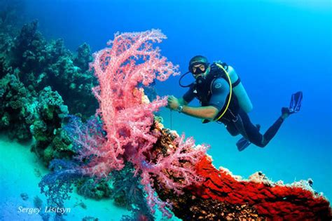 Dive Hurghada - 2020 All You Need to Know BEFORE You Go