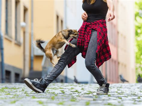 The Dog Trainer : What to Do About Your Humping Dog | Dog